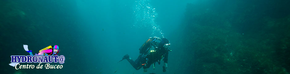 Los mamiferos marinos